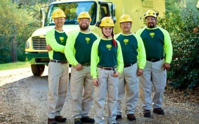 Professional Tree Maintenance for Proper Tree Care