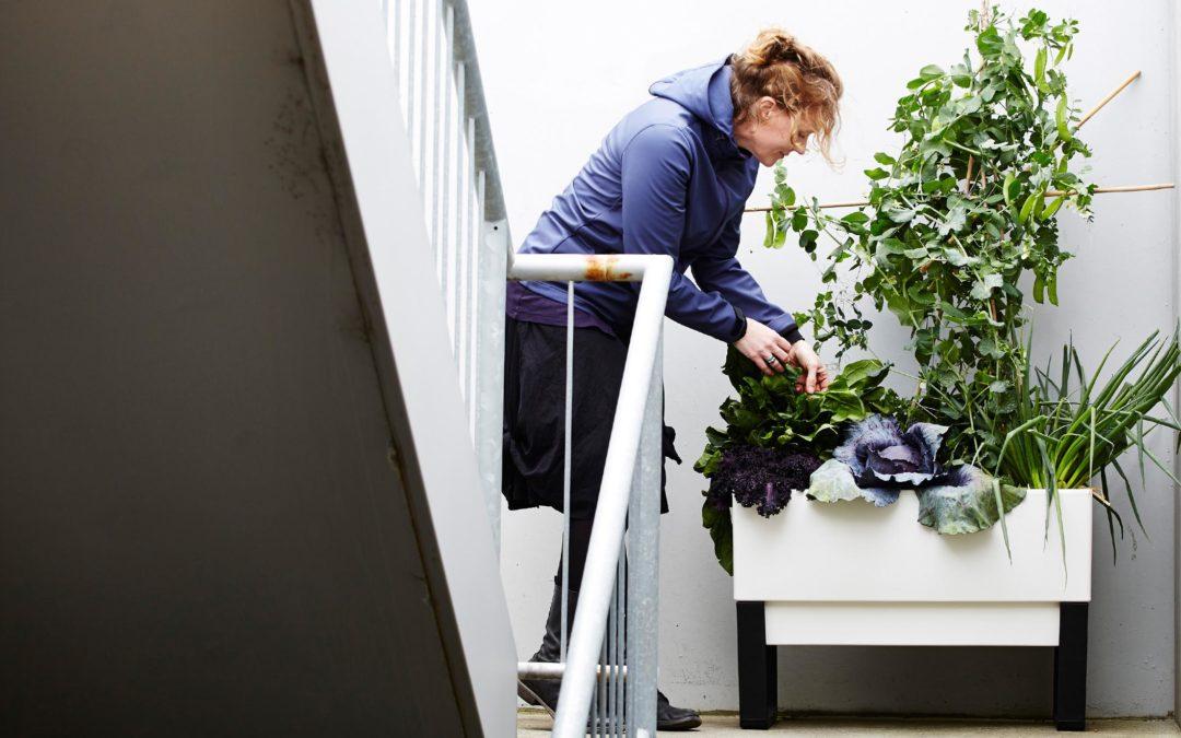 Urban Gardens: Growing Abundance in Small City Spaces