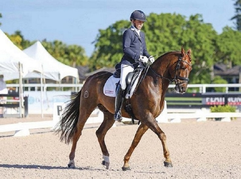 Essential Equestrian Gear: How to Choose the Right Horse Halter