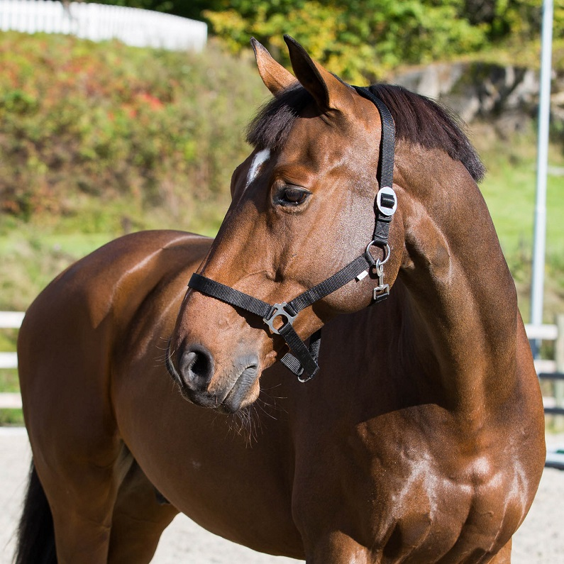 Why the Choice of Halter Matters