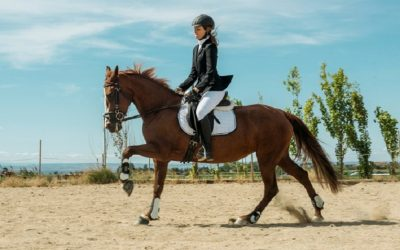 Basic Equestrian Gear: How to Choose the Right Horse Girth