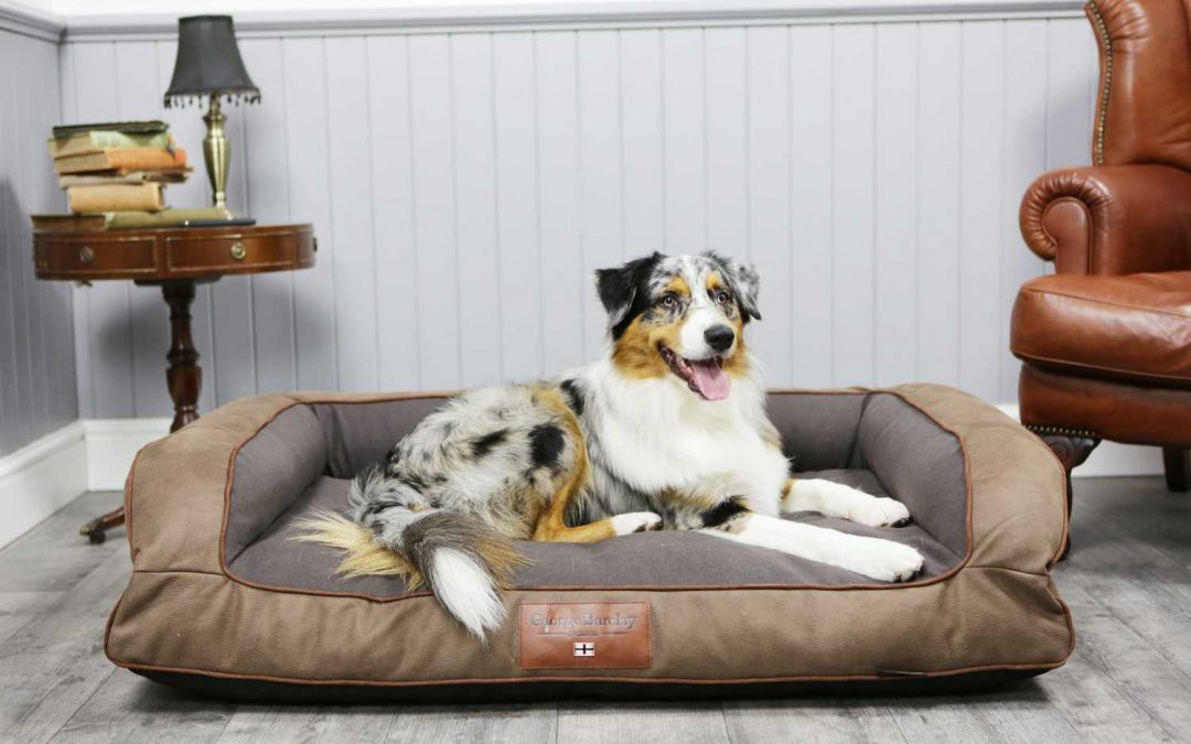 Dog Care Checklist For New Pet Owners